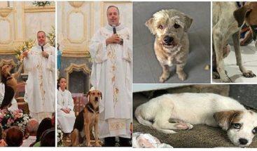 Sacerdote rescata a perritos callejeros y promueve la adopción en misa