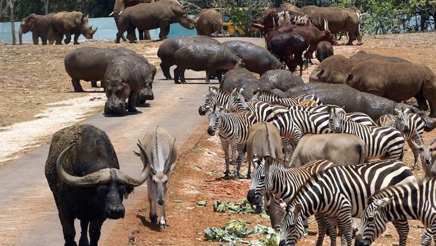 La recuperación de especies y la extinción marcan Día Mundial de los Animales