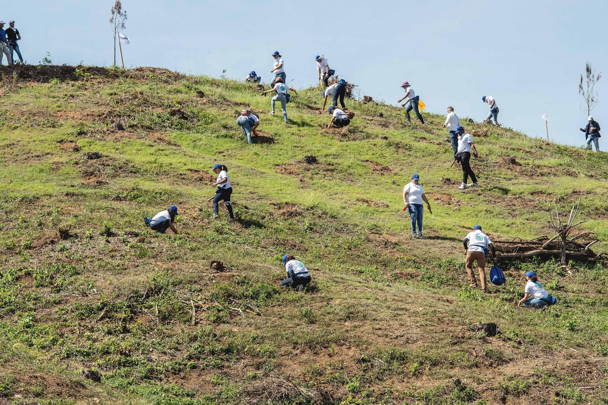 Empleados de AFP Popular reforestan en Santiago