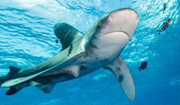 Tiburón arranca las manos y un pecho a una turista frente a su familia
