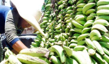 Ciudadanos se quejan por alto precio del plátano