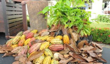 Ministro Agricultura afirma exportaciones de cacao alcanzan 195 millones de dólares este año