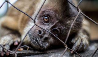 El comercio ilegal de animales, un creciente y cruel mercado negro en América
