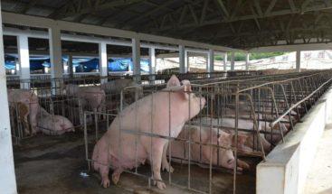 Procuraduría Medio Ambiente emplaza a productores informales de cerdos a eliminar criaderos en Pedernales
