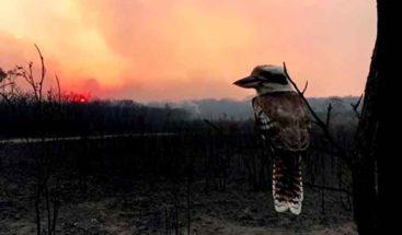 Ascienden a cuatro los muertos por los devastadores incendios en Australia