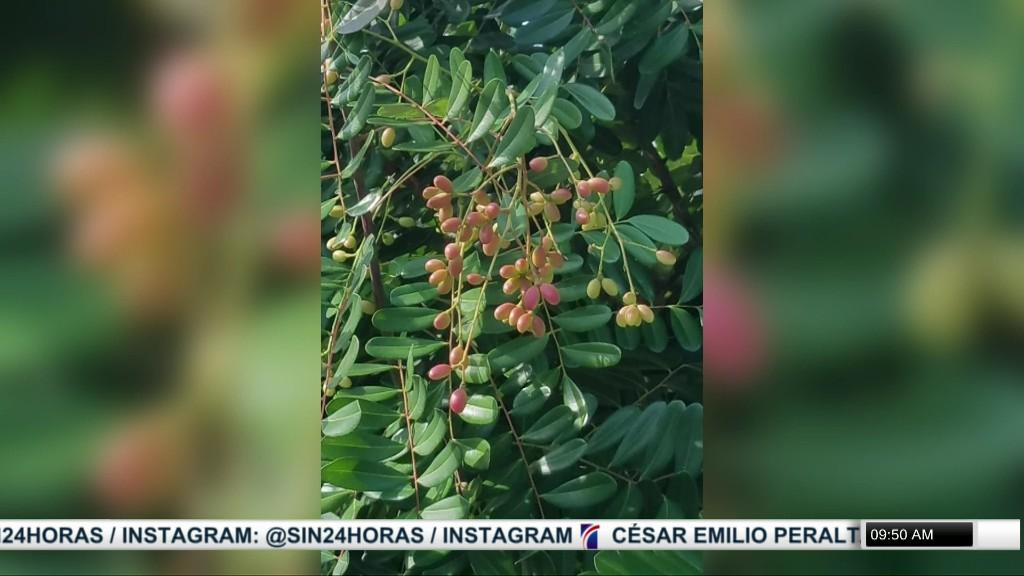 Consecuencias que puede traer para la fauna y flora la actual depredación a las Dunas de Baní