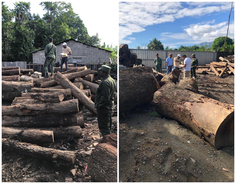 Realizan allanamiento en aserradero de Bonao procesaban madera de forma ilegal