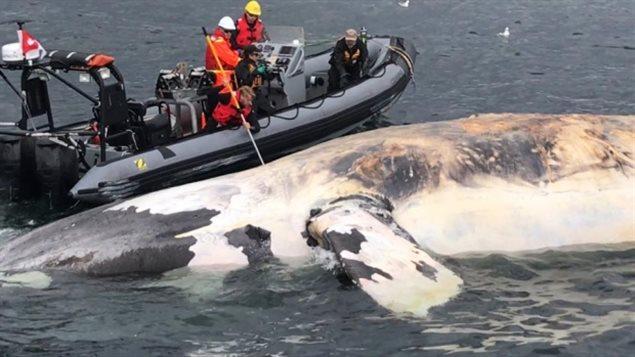 ¿Será la inteligencia artificial la responsable de salvar a las ballenas?