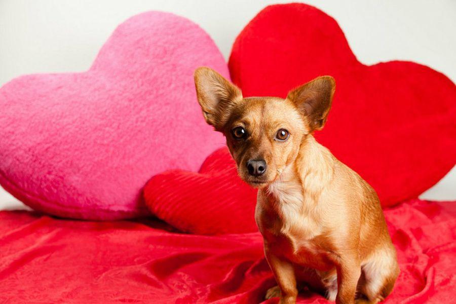 El amor y el bolsillo también van de la mano en el San Valentín de los perros