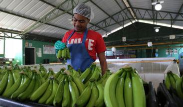 Decreto instruye a instituciones públicas adquirir los insumos en la agroindustria y la industria nacional