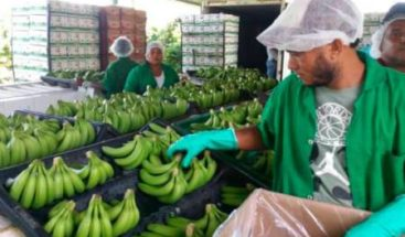 Productores dominicanos piden a la UE cambios en las normas sobre orgánicos