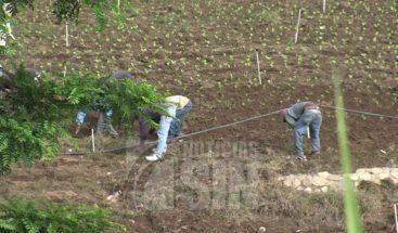 Banco Agrícola extenderá el plazo de préstamos vencidos a productores