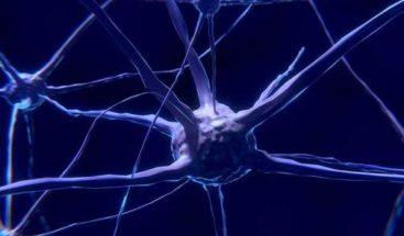 Descifran la maquinaria que decide cómo crecen y se mueven las neuronas