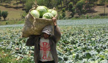Agricultura apoya a productores de vegetales y hortalizas
