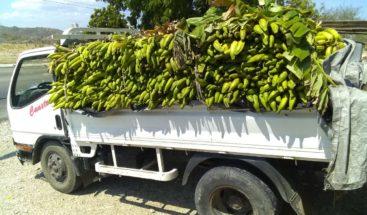 Detienen camión de plátanos con más 100 paquetes de presumiblemente marihuana