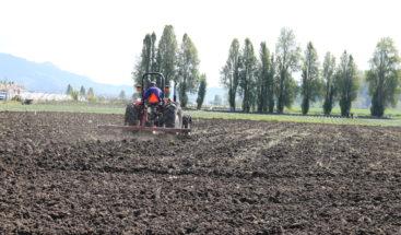 Falta de mercados crean incertidumbre a producción agrícola de Constanza