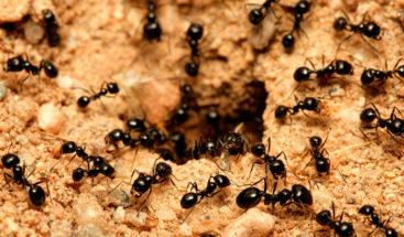 Científico convive setenta colonias de hormigas