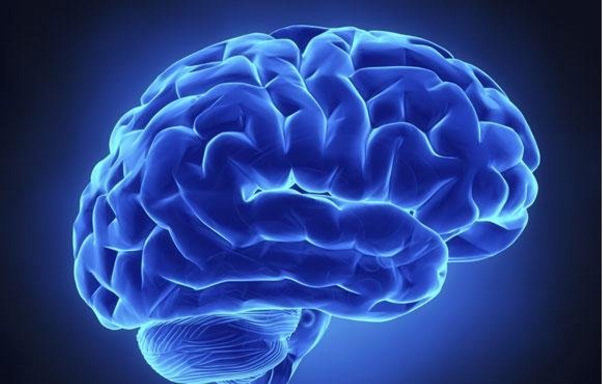 Hallan una nueva forma de transportar eficazmente fármacos al cerebro