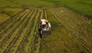 Sector agropecuario creció un 5%, según ministro de Agricultura