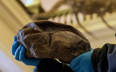 Descubren en la Antártida el huevo más grande de la era de los dinosaurios