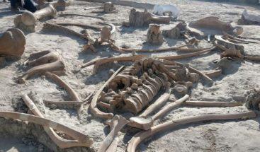 México iniciará estudio multidisciplinario en dos yacimientos con mamuts