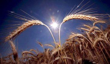 Cereales y semillas, base de una alimentación saludable