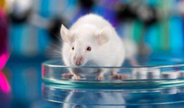 Un tratamiento que genera nuevas neuronas termina con el párkinson en ratones