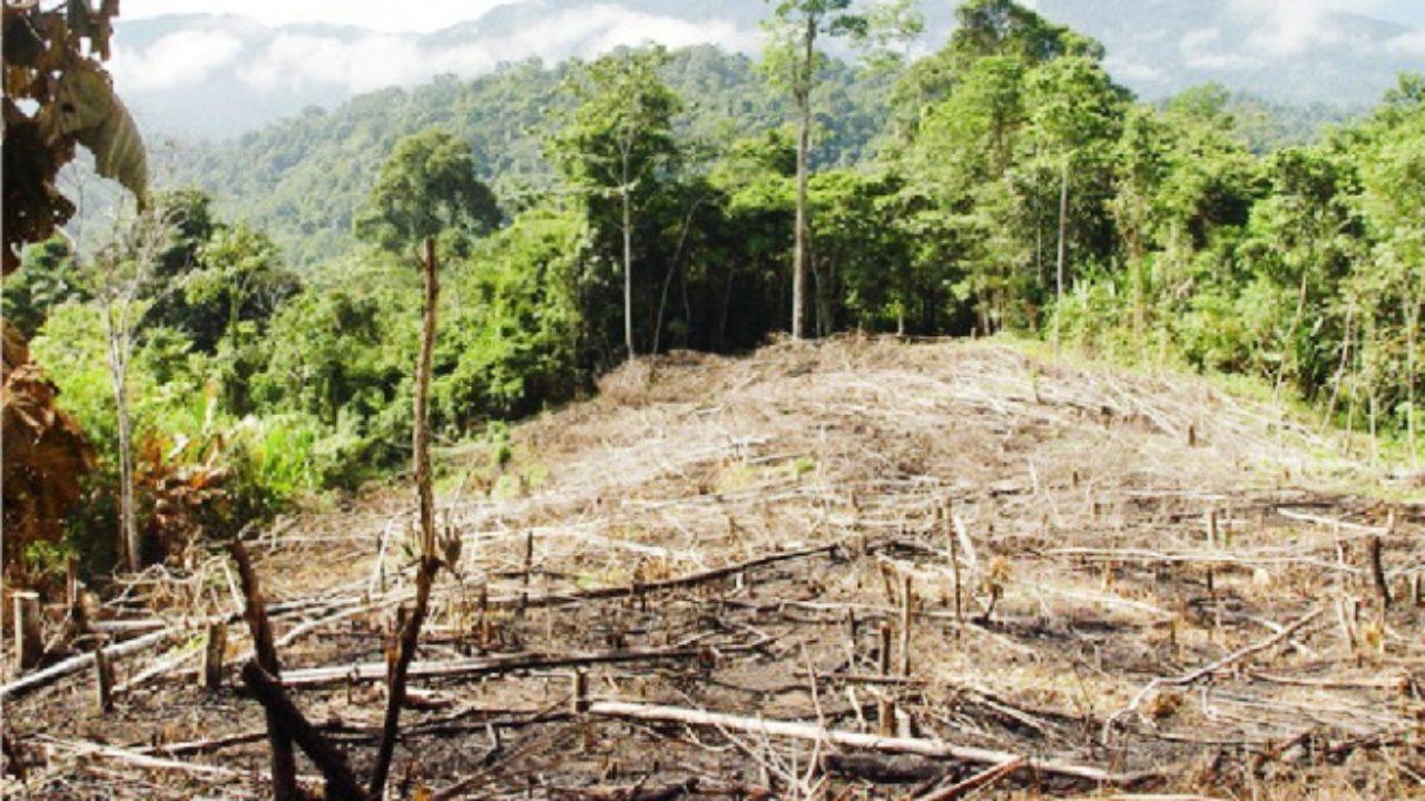 Ministerio Público destaca sentencias condenatorias por delitos ambientales