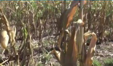 Ante sequía en la zona autoridades y agricultores se reúnen en Dajabón