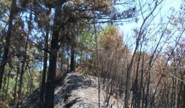 Denuncian tala y quema de árboles en Baní