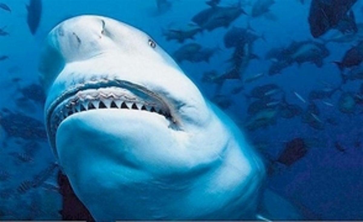 Un niño de Florida recibe 19 puntos por ataque de tiburón