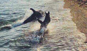 Viral el video de un perro y un delfín jugando en la playa