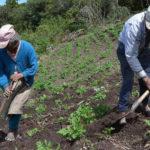 La pandemia empeorará la calidad de la alimentación mundial, según FAO y OCDE