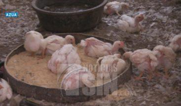 Se escasea la carne de pollo en Azua