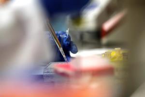 Vacuna genera respuesta inmune en primeras pruebas en EE.UU.