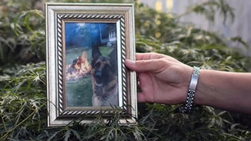 Fallece el primer perro diagnosticado con el COVID-19 en EEUU