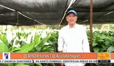 """Cómo cuidar la """"Cala"""", una de las plantas más populares de toda esta temporada"""