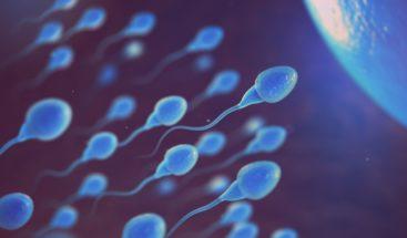 Los espermatozoides humanos no nadan de la forma que se creía hasta ahora