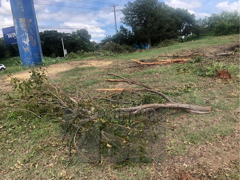 Autoridades del Aeropuerto Internacional del Cibao denuncian tala indiscriminada de árboles por parte del ayuntamiento