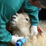 Investigadores desarrollan una vacuna contra la