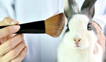 Latinoamérica avanza para dejar atrás las pruebas cosméticas en animales