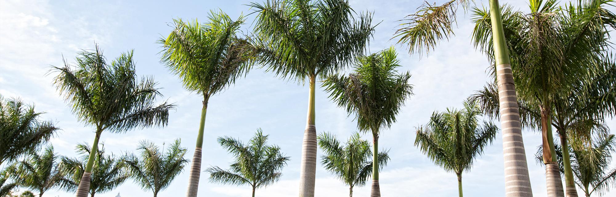 Contact Us Sinai Residences of Boca Raton