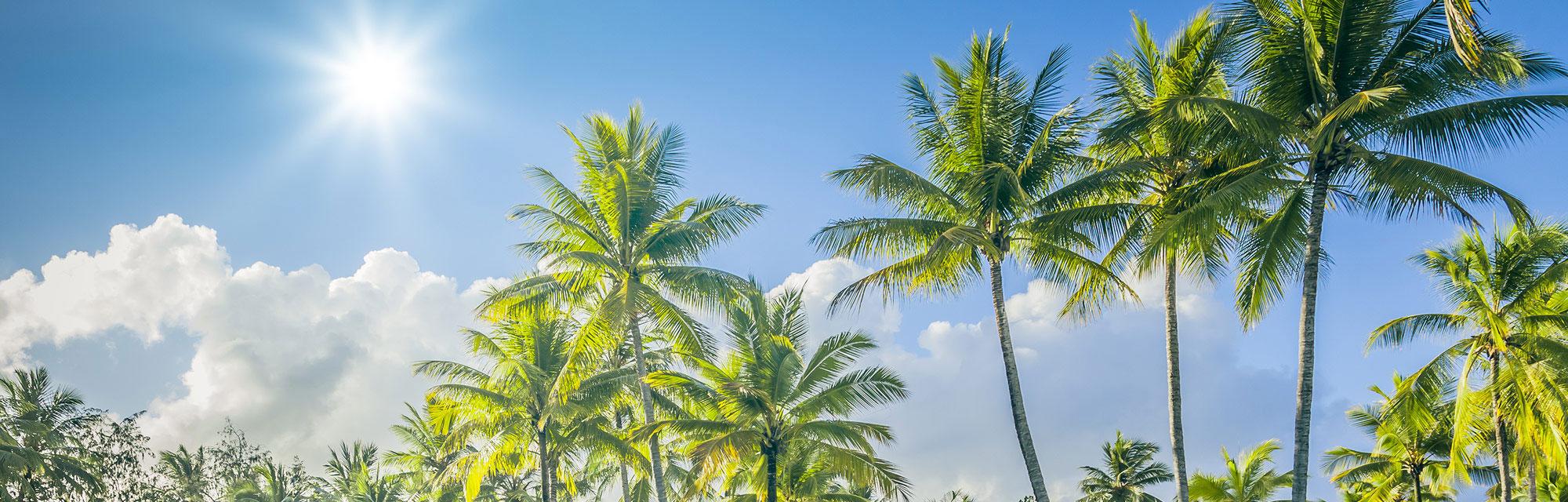Meet the Staff Sinai Residences of Boca Raton
