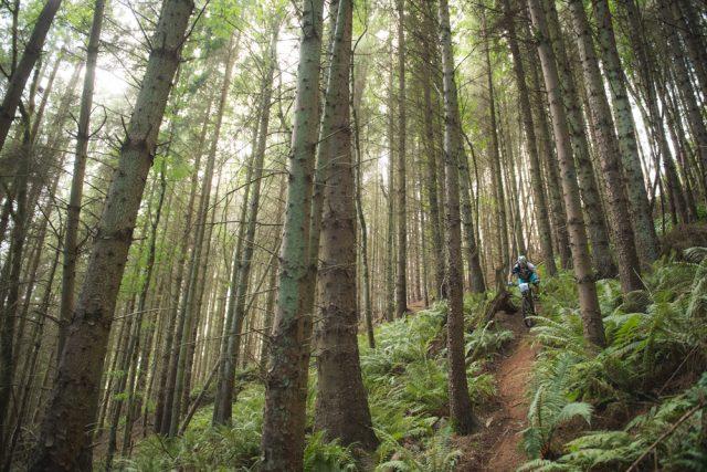 exmoor enduro trail dmr forest