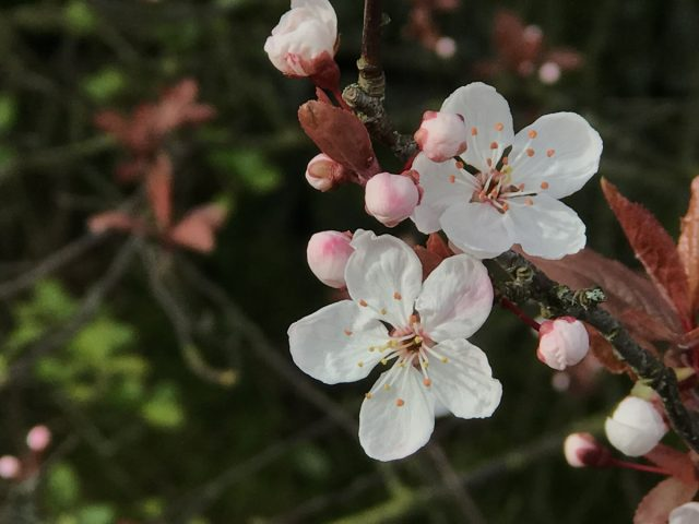 Spring Hannah