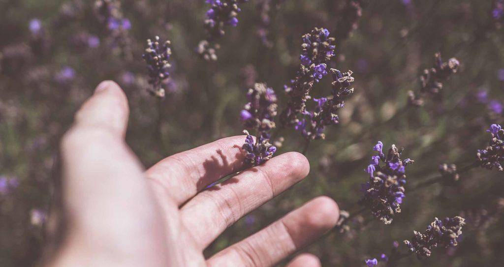 Käsi sivelee kedon kukkia.