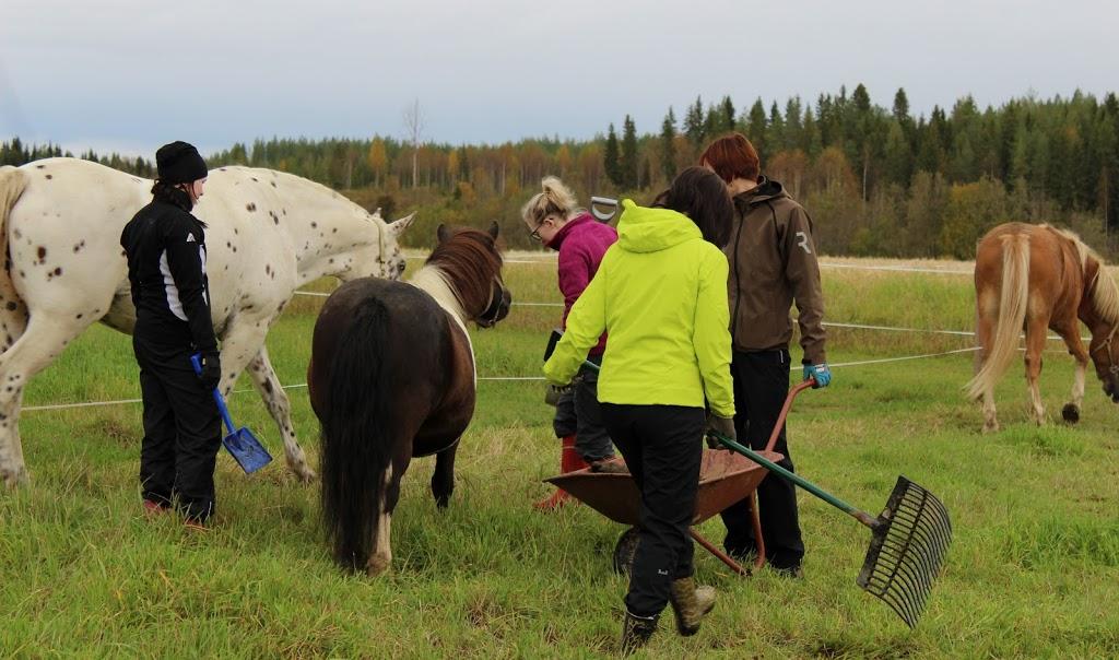 Hevosia, poneja, ihmisiä, haravia ja kottikärry pellolla.