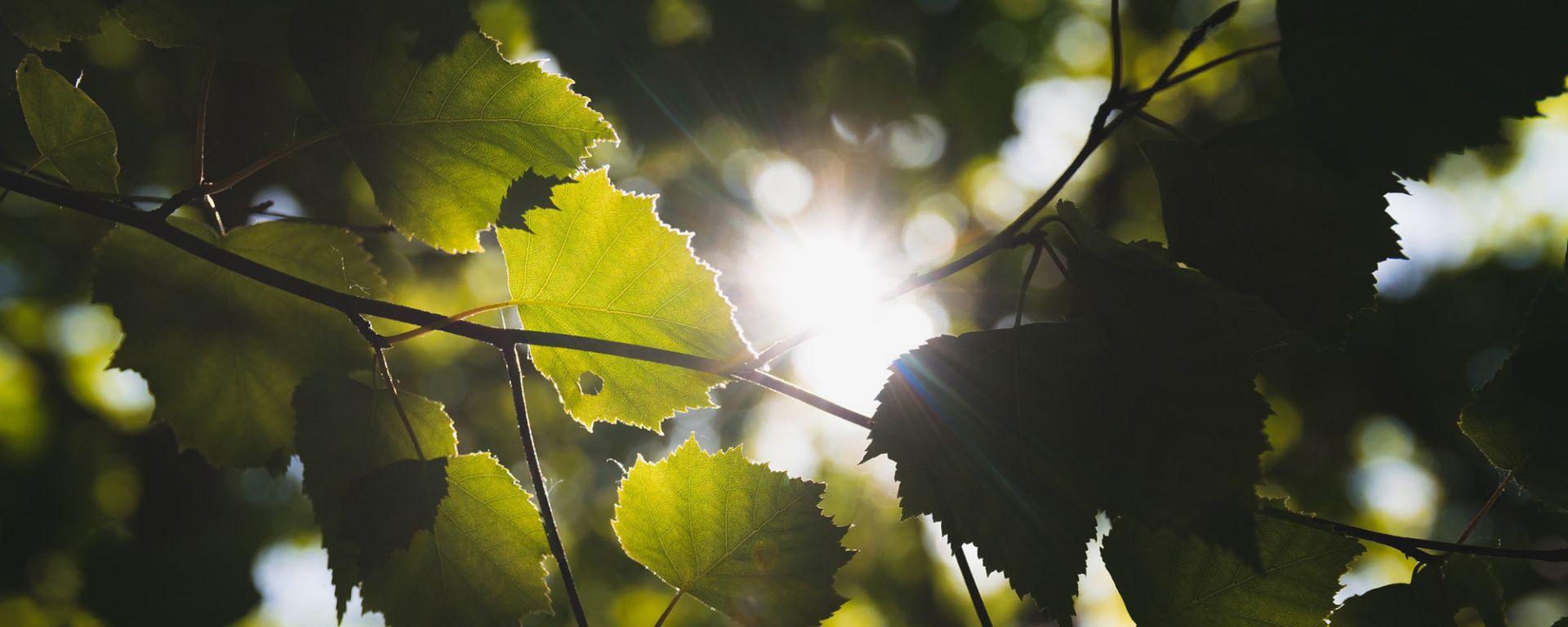 Aurinko paistaa puiden lehtien välistä