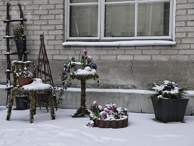 Lumisia pajupunoksesta tehtyjä puutarhakalusteita.