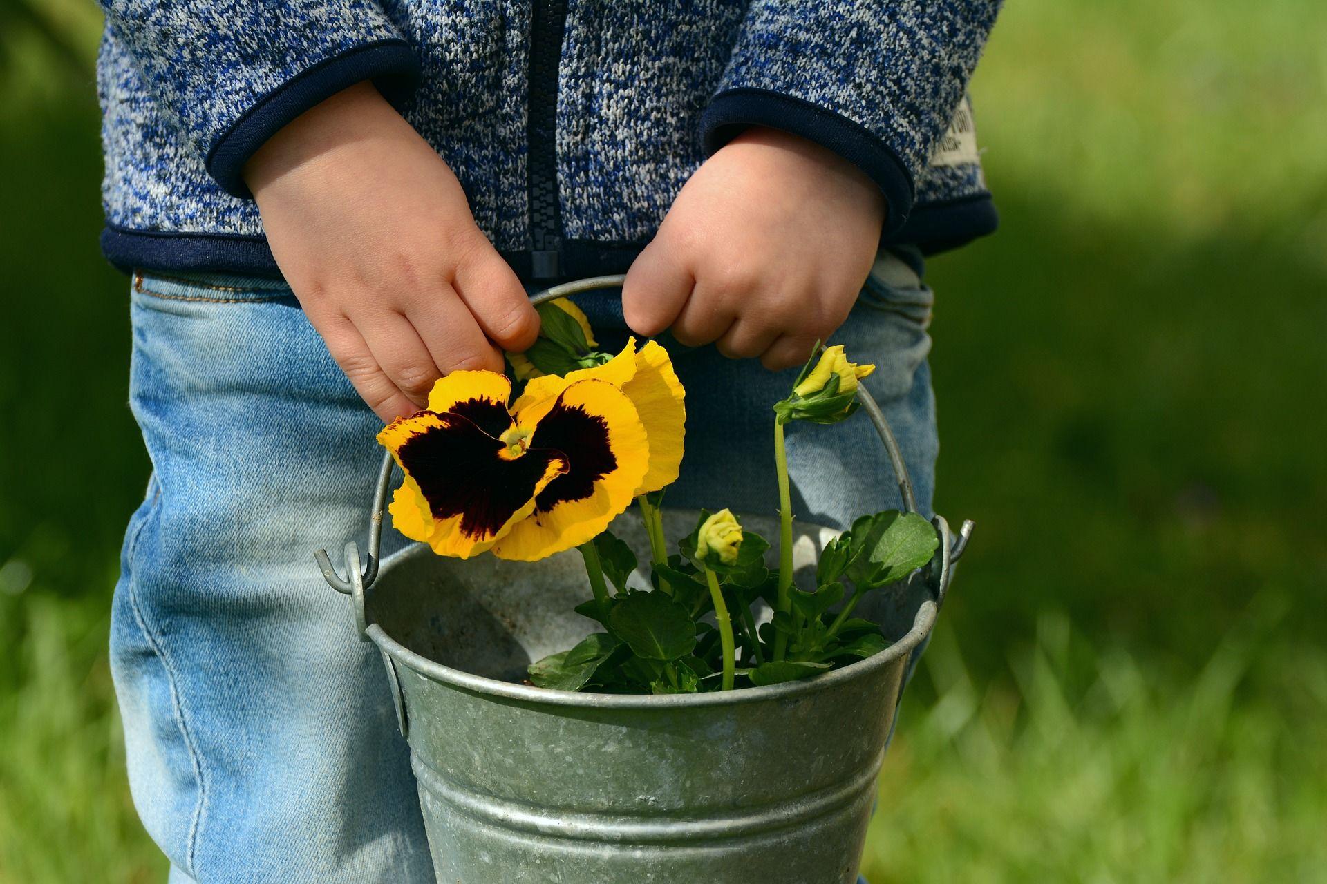 Lapsi kantaa orvokkia ämpärissä.
